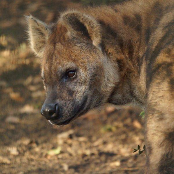 Adieu Babrak… - ZooParc de Beauval