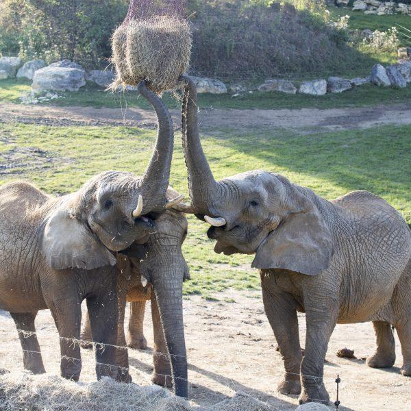 Bienvenue à Tots ! - ZooParc de Beauval