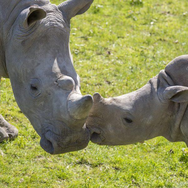 Journée des rhinos