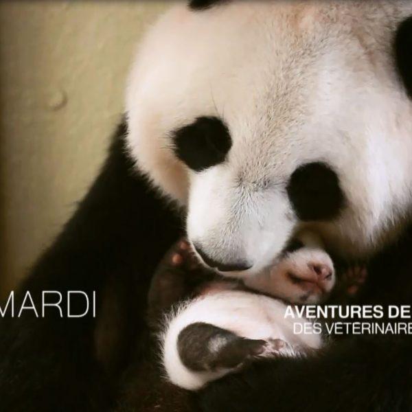 «Aventures de médecine» sur Beauval ! - ZooParc de Beauval