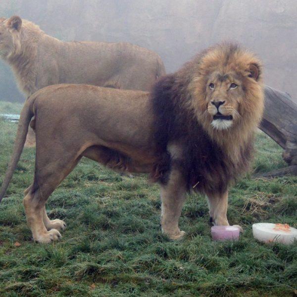 Le jour du Roi ! - ZooParc de Beauval