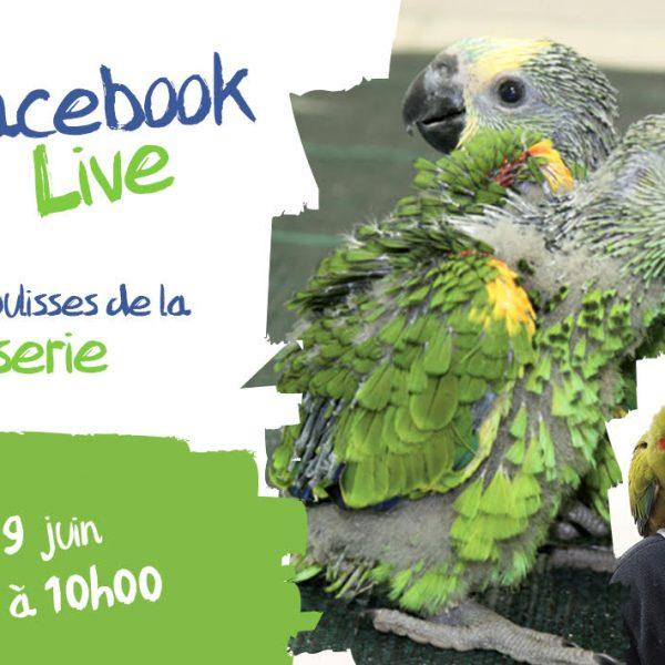 En direct des coulisses… - ZooParc de Beauval
