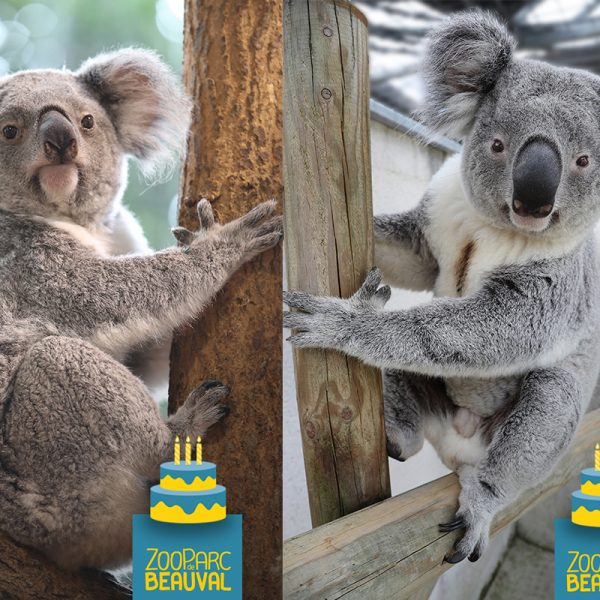 Happy birthday to… - ZooParc de Beauval