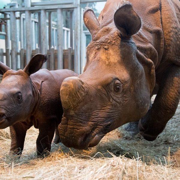 Les bébés de Beauval sur TF1 - ZooParc de Beauval