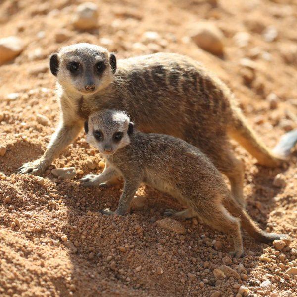Encore des bébés ! - ZooParc de Beauval
