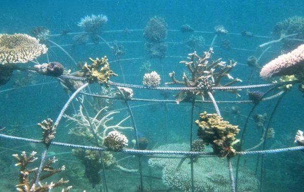 Protégeons les coraux à Bali