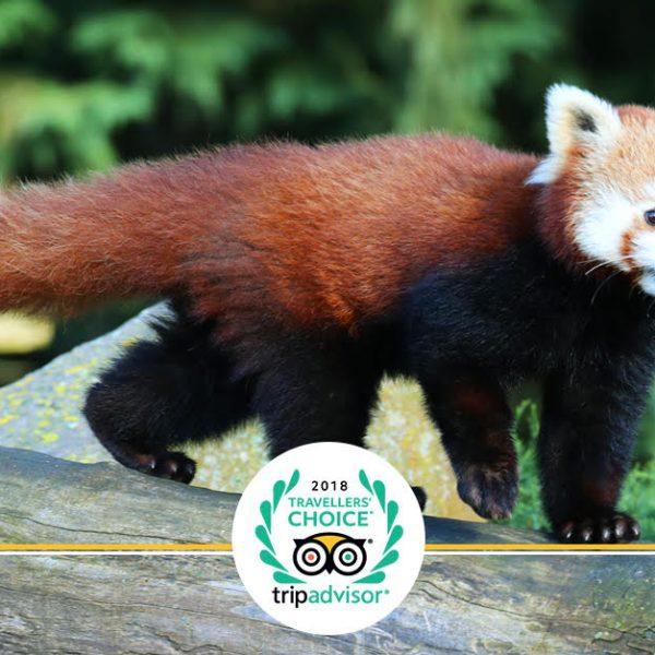 Dans le TOP 5 ! - ZooParc de Beauval
