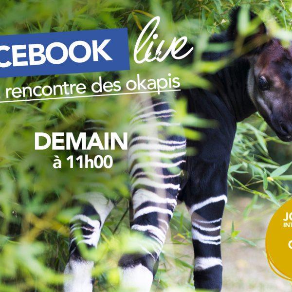 Facebook Live «Okapis» - ZooParc de Beauval
