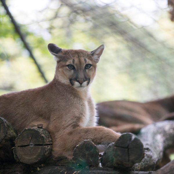 Bienvenue Sheena ! - ZooParc de Beauval