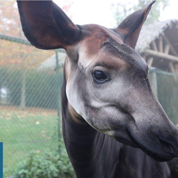 Ann, la dizaine - ZooParc de Beauval