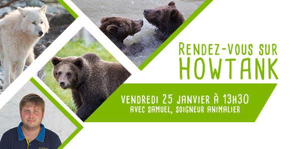 Tchat avec nos soigneurs : loups et ourses - ZooParc de Beauval