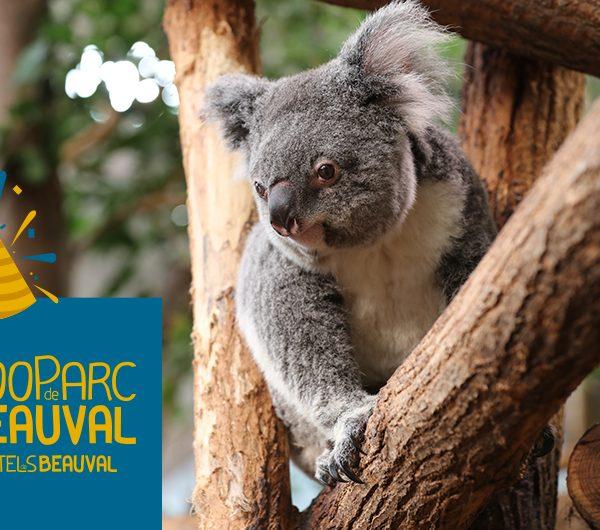 Un bon anniversaire à Alguna ! - ZooParc de Beauval
