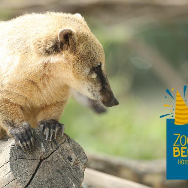 Joyeux anniversaire Baya! - ZooParc de Beauval