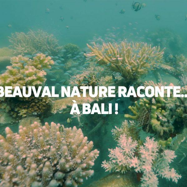 Vidéo : Beauval Nature à Bali, protégeons les coraux. - ZooParc de Beauval