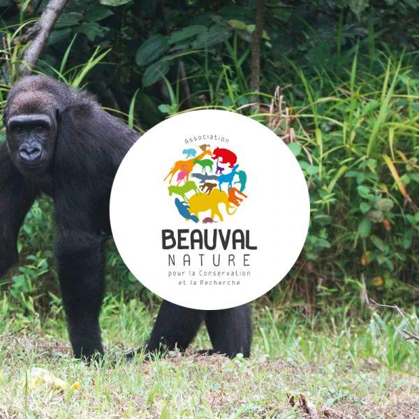 Gorilles réintroduits – À la découverte de l'île ! - ZooParc de Beauval
