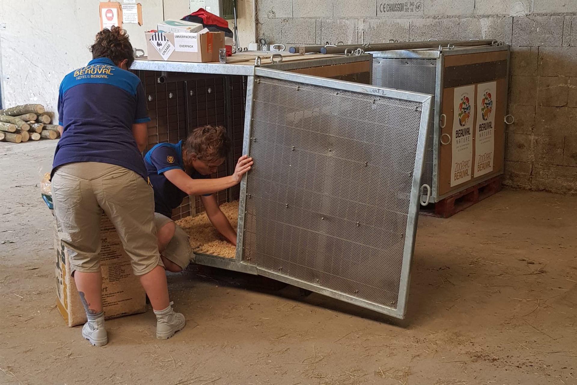 Préparation des caisses pour la réintroduction