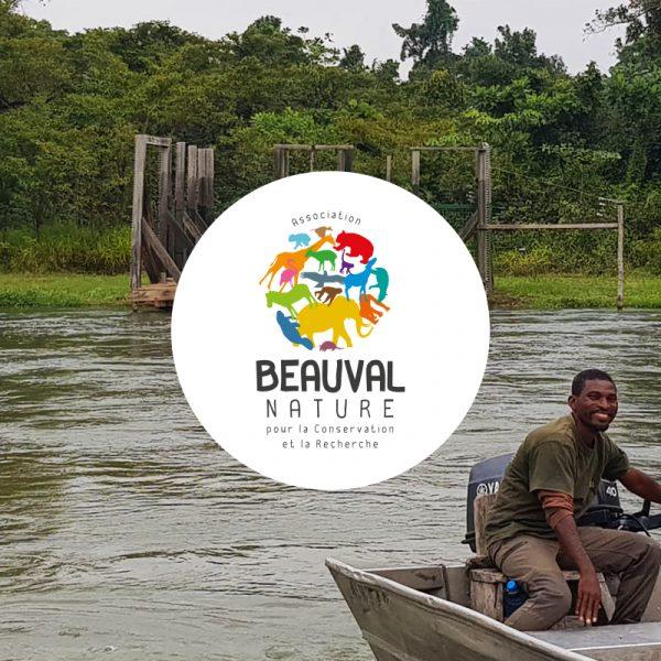 Gorilles réintroduits au Gabon – Vers l'île de relâcher