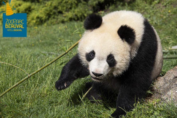 ça Y Est Yuan Meng A 2 Ans Bon Anniversaire Bébé Panda