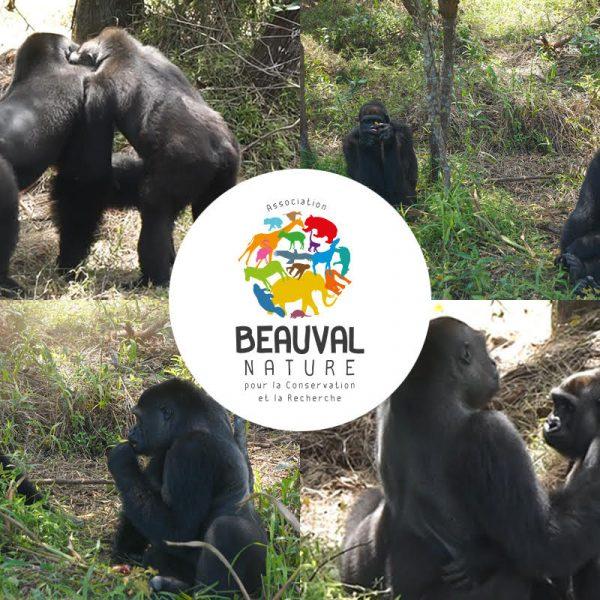 Love story au Gabon. Quand Mayombé rencontre Djongo !