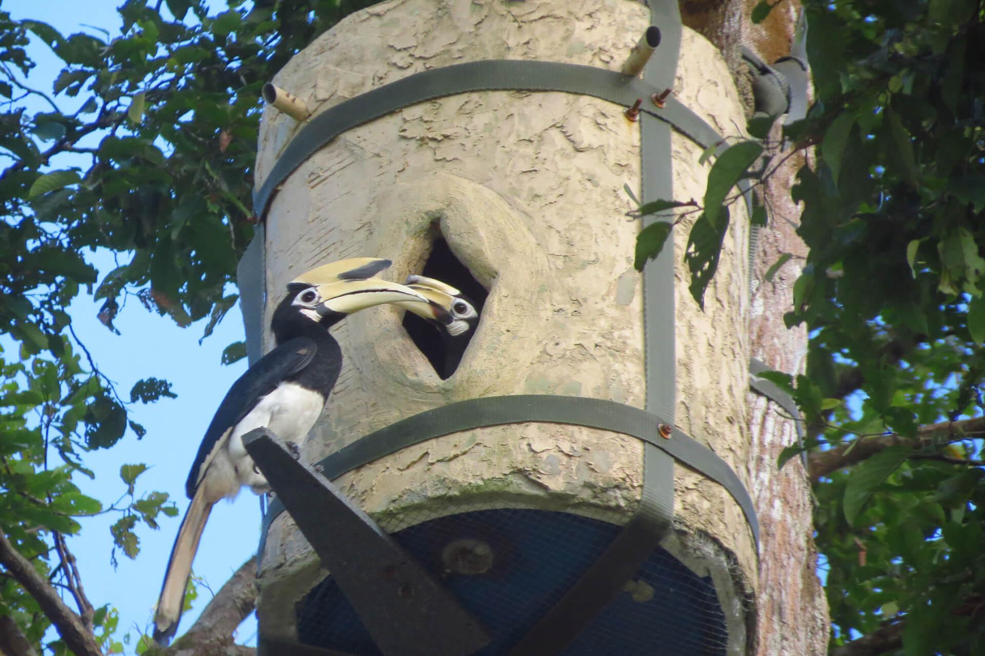 programme de conservation Hutan