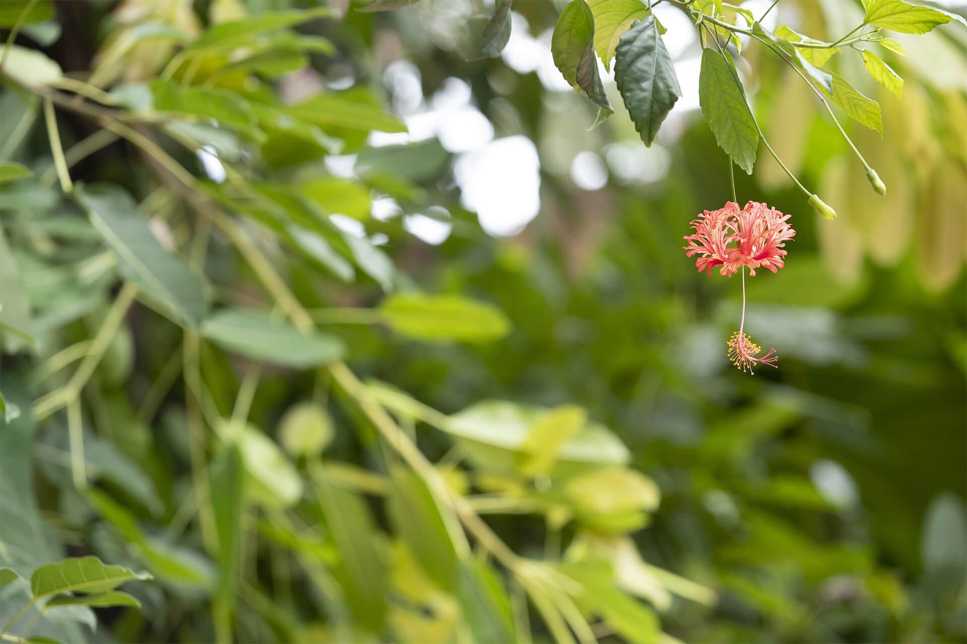 Végétation fleurie au ZooParc de Beauval