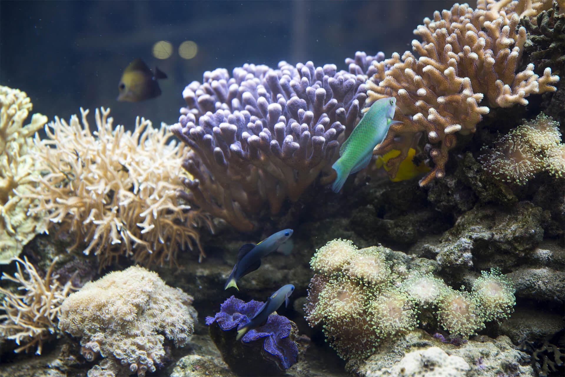 coraux et poissons exotiques