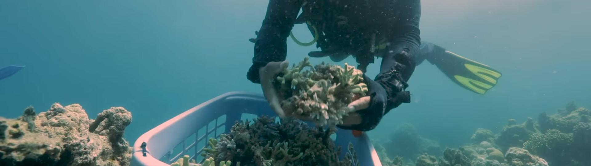 Restauration d'un récif de corail à Bali